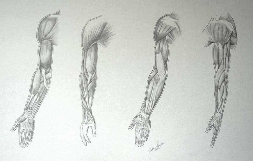 Muscles-of-an-Arm-31-3-by-Drawing-Academy