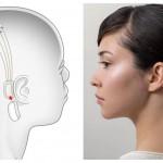 Информацию из мозга будут считывать «нити» – импланты